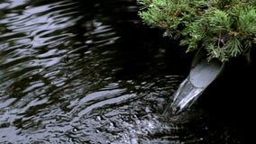 Carpe japonaise de koi dans le lac Tokyo japan clips vidéos