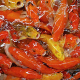 Carpe ou poissons de fantaisie de koi Photo libre de droits