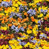Carpent from some colour flowers Royalty Free Stock Image