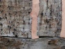 Carpenter's fläckar på gammal timmer-inramad byggnad Fotografering för Bildbyråer