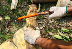 Carpenter cutting wood with saw. Craftsman working with hand saw.  Royalty Free Stock Photos