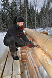 Carpenter makes marks timber surface, using logs scribing tool Stock Photography