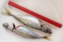 Carpenter´s pencil beside mackerels Royalty Free Stock Photos