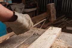 Carpenter using a hammer hitting a nail on wood Stock Images