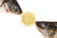 Carpes avec la tranche de citron d'isolement sur le blanc Images stock
