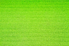 Carpet. A Green carpet on background royalty free stock photo