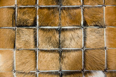 Carpet of animal fur Royalty Free Stock Images