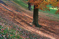 Carpet in Autumn Stock Photo