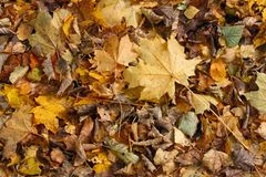 A carpet of autumn leaves. Yellow, red, green, brown autumn leaves. Nice background Stock Photography