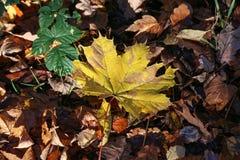 Carpet of autumn leaves. Fallen autumn leaves on the ground. Carpet of autumn leaves. Fallen autumn leaves on the ground stock photos