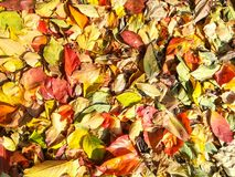Carpet of autumn leaves in many colors.  stock image