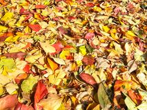 Carpet of autumn leaves in many colors. Carpet of autumn leaves in many bright colors stock image