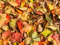 Carpet of autumn leaves in many colors Royalty Free Stock Photos