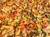 Carpet of autumn leaves in many colors Stock Photo