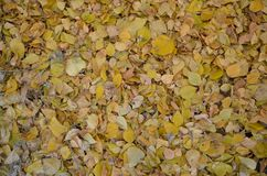 A carpet of autumn leaves royalty free stock photo