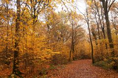 Path carpeted in fall colors stock photo