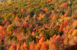 Carpet of Autumn trees. Colorful autumn trees in dense Allegheny national forest stock photo