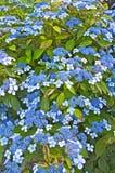 Carpet of Blue Royalty Free Stock Image