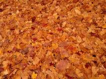 carpet of bright orange autumn leaves Stock Photo