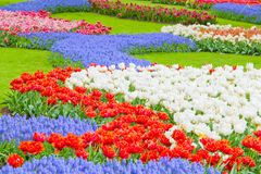 Carpet of Color Royalty Free Stock Image