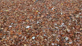 Carpet of dried leafs in autumn stock video