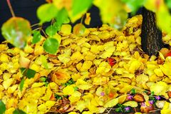 Carpet of Fall Colored Leaves, Noteably Yellow, with a Top level of Green. stock photo