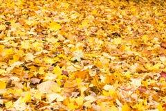 Carpet of fallen autumn foliage Stock Photos