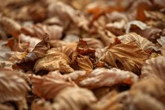 Carpet of fallen autumn leaves on grass. Maple and oak dry foliage. royalty free stock photos