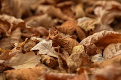 Carpet of fallen autumn leaves on grass. Maple and oak dry foliage. royalty free stock photo