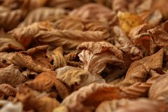 Carpet of fallen autumn leaves on grass. Maple and oak dry foliage. stock image