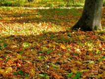Carpet of the fallen autumn leaves Royalty Free Stock Photo