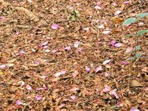 Carpet of fallen leaves with pink petals. Carpet of fallen dry leaves with pink petals in autumn Stock Photography