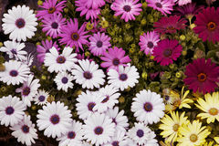 Carpet of flowers Royalty Free Stock Images