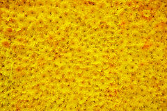 Carpet of flowers. Yellow with red undertone Stock Image