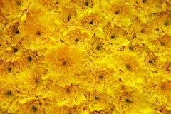 Carpet of flowers Stock Image