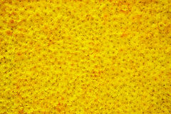 Carpet of flowers Royalty Free Stock Photo