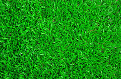 Carpet grass Royalty Free Stock Photography