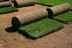 Carpet grass Stock Photo