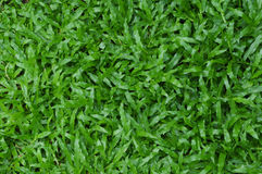 Carpet grass textured Stock Photography