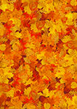 Carpet of leafs Royalty Free Stock Photography