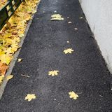 Autumns leafs. A carpet of leafs royalty free stock images