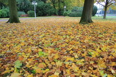 Carpet of leaves Royalty Free Stock Image