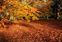 A carpet of leaves during Autumn stock photo