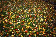 Carpet of leaves Stock Image