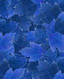 Carpet of leaves jean Royalty Free Stock Images