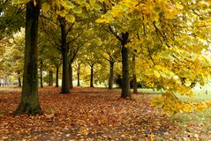 Carpet of leaves under the trees Stock Photo