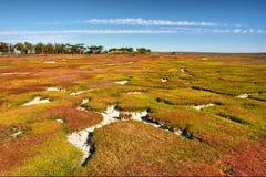 'Carpet' - mangrove marshland field. Shot in West Coast Nature Reserve, near Langebaan, Western Cape; South Africa royalty free stock photo
