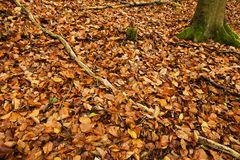 Carpet Of Autumn Leaves Stock Images