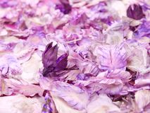 Carpet of purple potpourri. Royalty Free Stock Photography