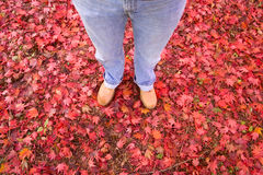 Carpet of red autumn leaves and person's legs Royalty Free Stock Photo